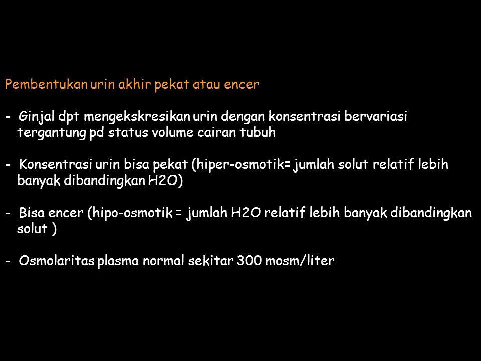 Pembentukan urin akhir pekat atau encer - Ginjal dpt mengekskresikan urin dengan konsentrasi bervariasi tergantung pd status volume cairan tubuh - Konsentrasi urin bisa pekat (hiper-osmotik= jumlah solut relatif lebih banyak dibandingkan H2O) - Bisa encer (hipo-osmotik = jumlah H2O relatif lebih banyak dibandingkan solut ) - Osmolaritas plasma normal sekitar 300 mosm/liter