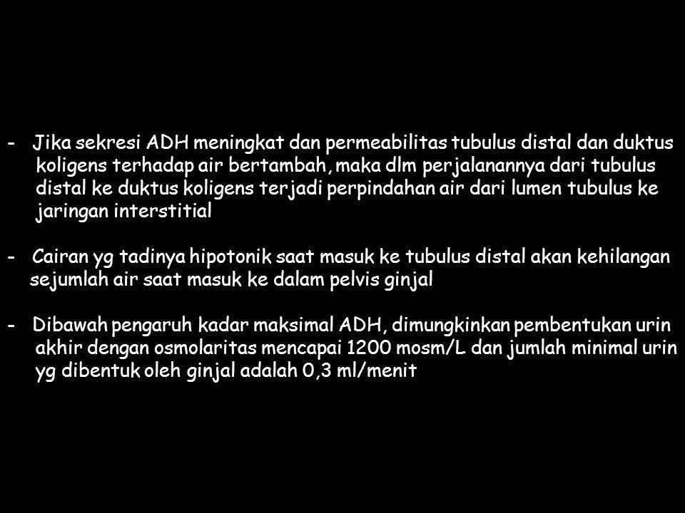 - Jika sekresi ADH meningkat dan permeabilitas tubulus distal dan duktus koligens terhadap air bertambah, maka dlm perjalanannya dari tubulus distal k