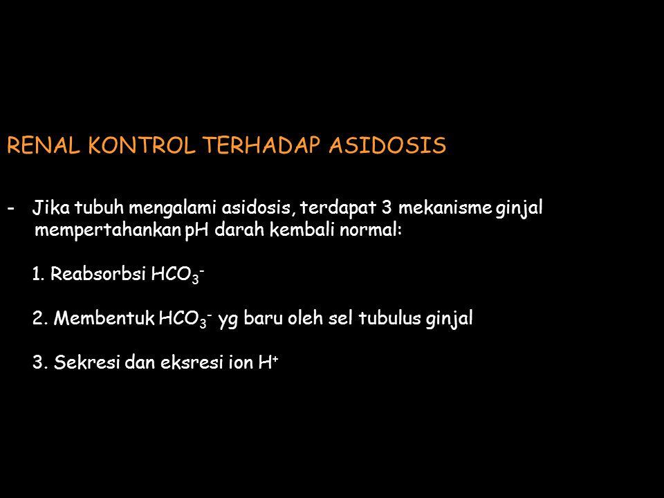 RENAL KONTROL TERHADAP ASIDOSIS -Jika tubuh mengalami asidosis, terdapat 3 mekanisme ginjal mempertahankan pH darah kembali normal: 1. Reabsorbsi HCO