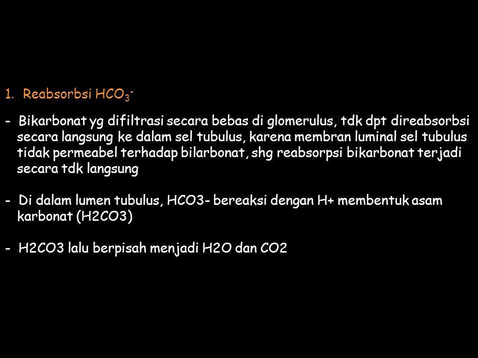 1.Reabsorbsi HCO 3 - - Bikarbonat yg difiltrasi secara bebas di glomerulus, tdk dpt direabsorbsi secara langsung ke dalam sel tubulus, karena membran luminal sel tubulus tidak permeabel terhadap bilarbonat, shg reabsorpsi bikarbonat terjadi secara tdk langsung - Di dalam lumen tubulus, HCO3- bereaksi dengan H+ membentuk asam karbonat (H2CO3) - H2CO3 lalu berpisah menjadi H2O dan CO2