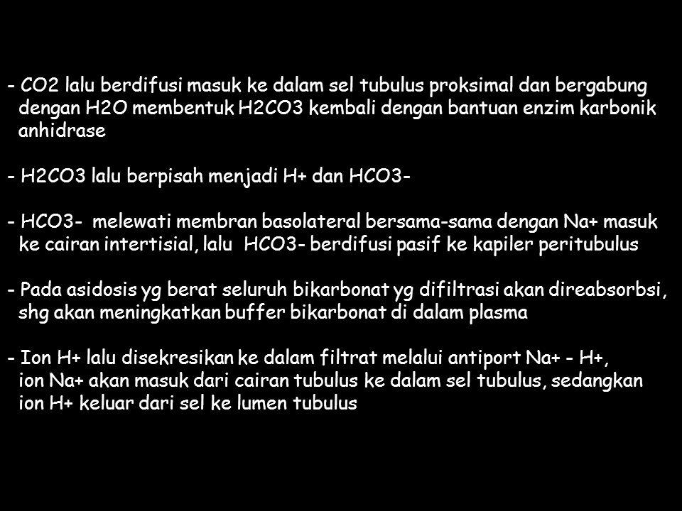 - CO2 lalu berdifusi masuk ke dalam sel tubulus proksimal dan bergabung dengan H2O membentuk H2CO3 kembali dengan bantuan enzim karbonik anhidrase - H2CO3 lalu berpisah menjadi H+ dan HCO3- - HCO3- melewati membran basolateral bersama-sama dengan Na+ masuk ke cairan intertisial, lalu HCO3- berdifusi pasif ke kapiler peritubulus - Pada asidosis yg berat seluruh bikarbonat yg difiltrasi akan direabsorbsi, shg akan meningkatkan buffer bikarbonat di dalam plasma - Ion H+ lalu disekresikan ke dalam filtrat melalui antiport Na+ - H+, ion Na+ akan masuk dari cairan tubulus ke dalam sel tubulus, sedangkan ion H+ keluar dari sel ke lumen tubulus
