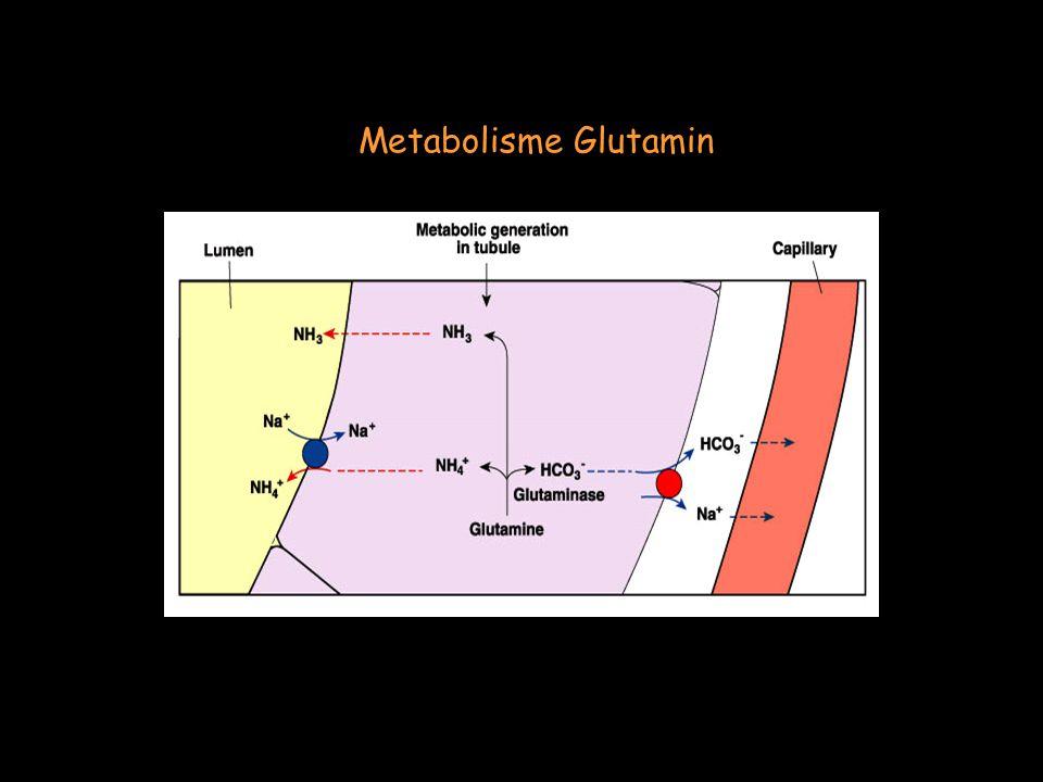 Metabolisme Glutamin