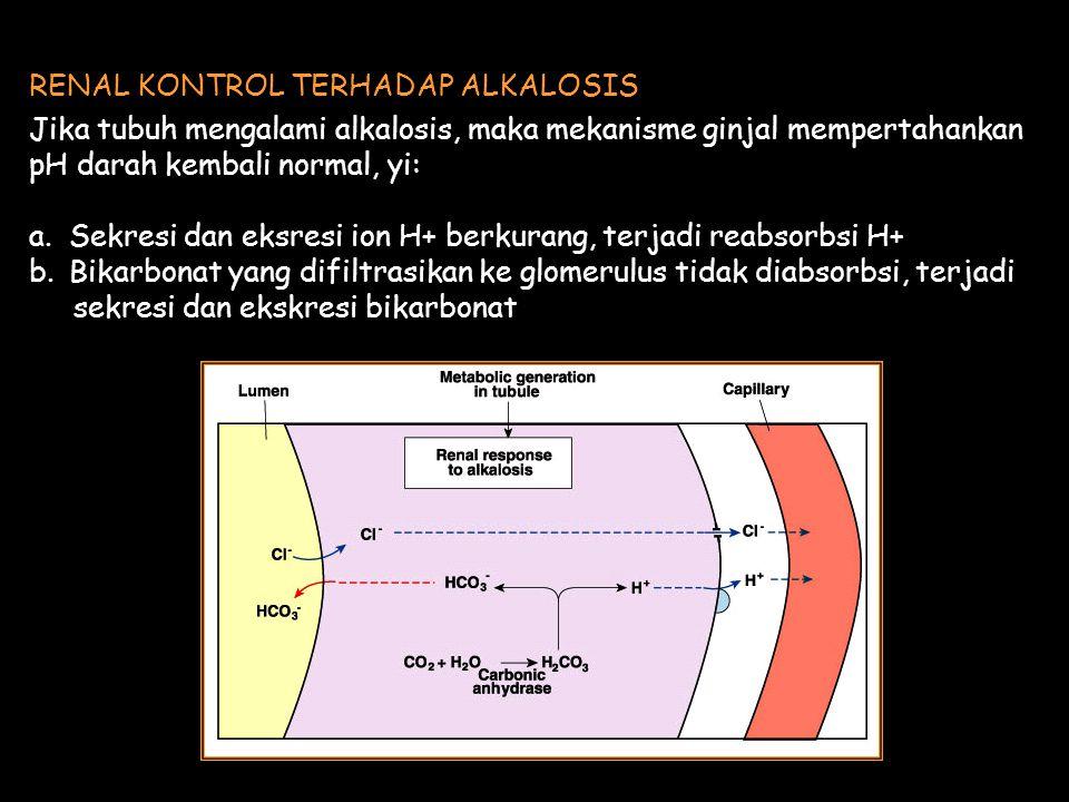 Jika tubuh mengalami alkalosis, maka mekanisme ginjal mempertahankan pH darah kembali normal, yi: a.Sekresi dan eksresi ion H+ berkurang, terjadi reabsorbsi H+ b.Bikarbonat yang difiltrasikan ke glomerulus tidak diabsorbsi, terjadi sekresi dan ekskresi bikarbonat RENAL KONTROL TERHADAP ALKALOSIS