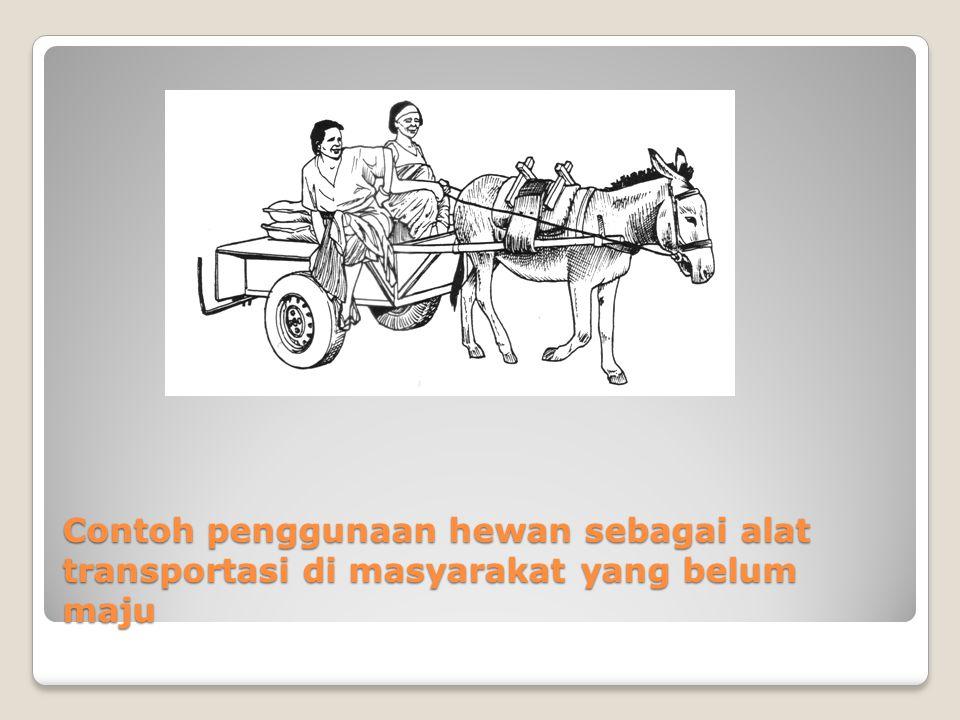 Contoh penggunaan hewan sebagai alat transportasi di masyarakat yang belum maju
