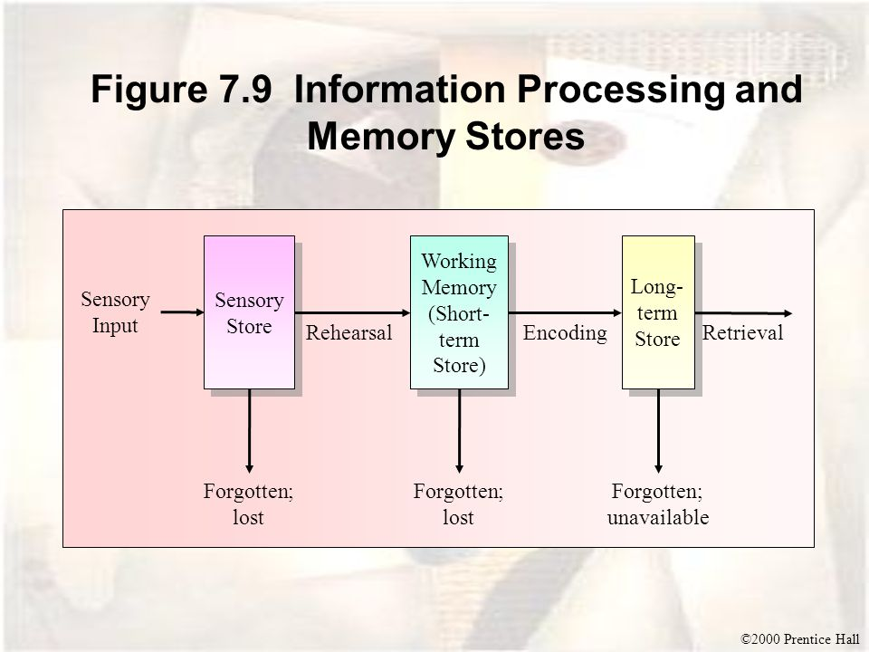 ©2000 Prentice Hall Figure 7.9 Information Processing and Memory Stores Sensory Store Working Memory (Short- term Store) Long- term Store Sensory Inpu