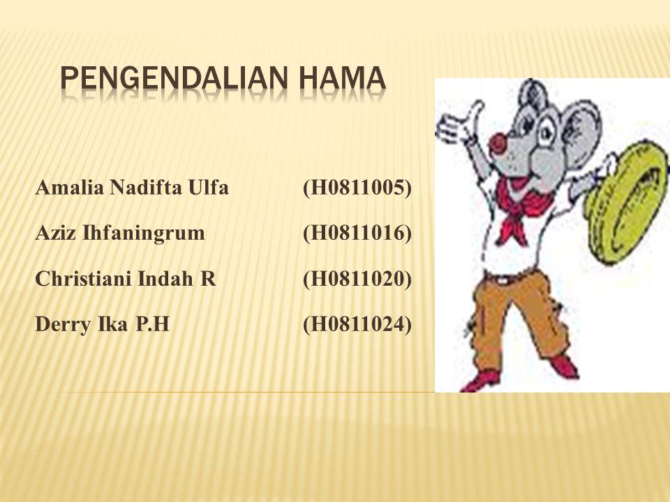 Amalia Nadifta Ulfa(H0811005) Aziz Ihfaningrum(H0811016) Christiani Indah R(H0811020) Derry Ika P.H(H0811024)