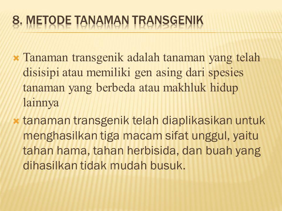  Tanaman transgenik adalah tanaman yang telah disisipi atau memiliki gen asing dari spesies tanaman yang berbeda atau makhluk hidup lainnya  tanaman