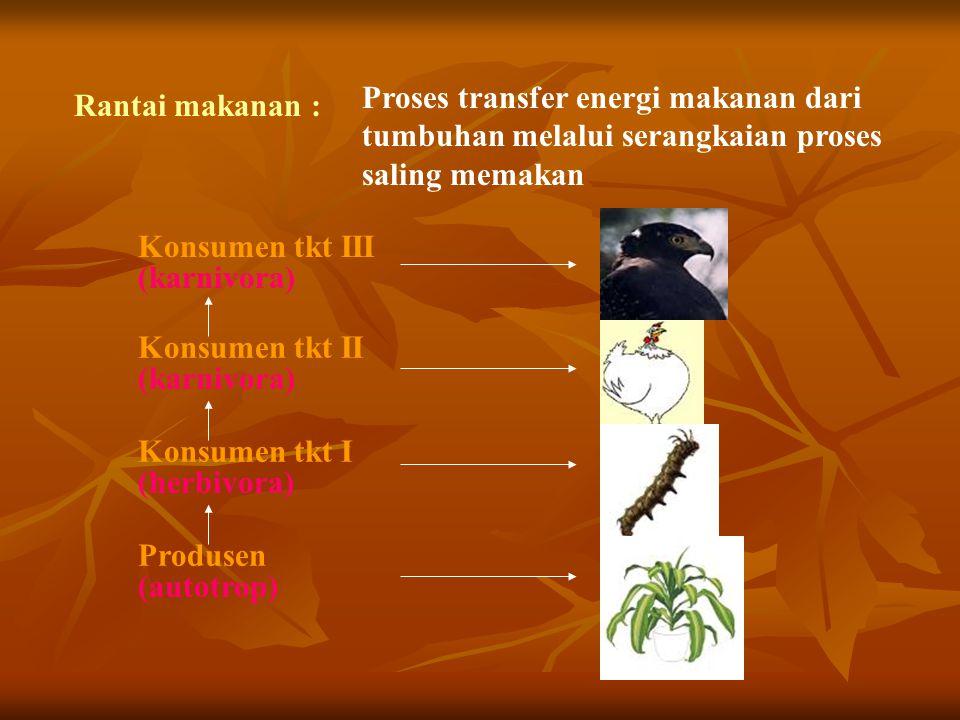 Rantai makanan : Proses transfer energi makanan dari tumbuhan melalui serangkaian proses saling memakan Konsumen tkt III (karnivora) Konsumen tkt II (