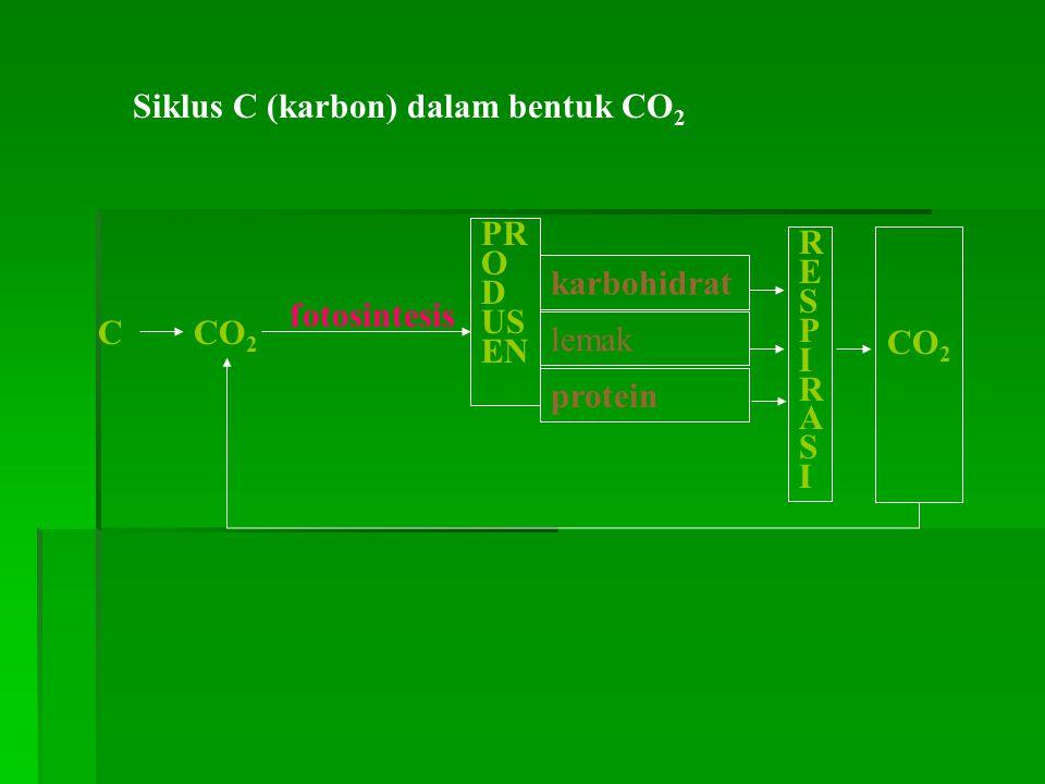 Siklus C (karbon) dalam bentuk CO 2 fotosintesis PR O D US EN lemak karbohidrat protein RESPIRASIRESPIRASI CO 2 C
