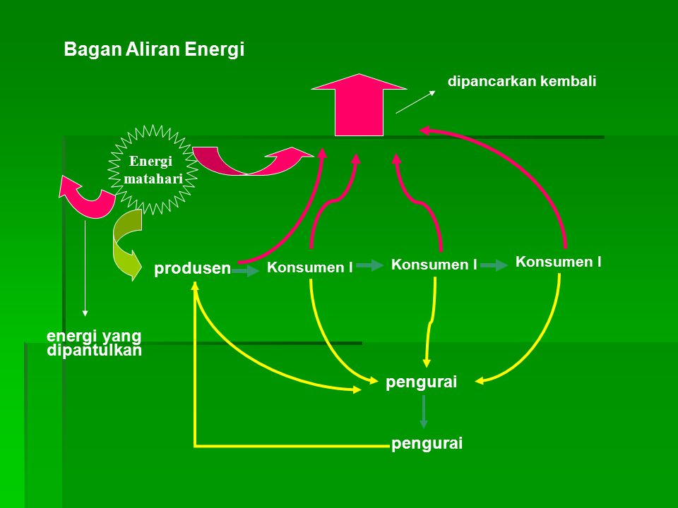 Bagan Aliran Energi Energi matahari energi yang dipantulkan produsen Konsumen I pengurai dipancarkan kembali pengurai