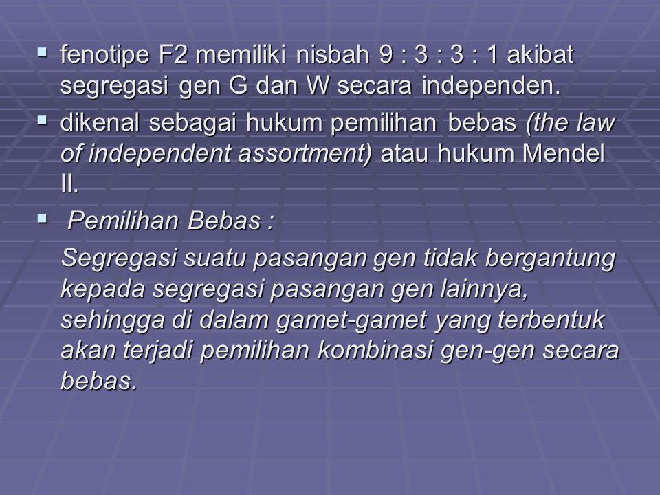  fenotipe F2 memiliki nisbah 9 : 3 : 3 : 1 akibat segregasi gen G dan W secara independen.