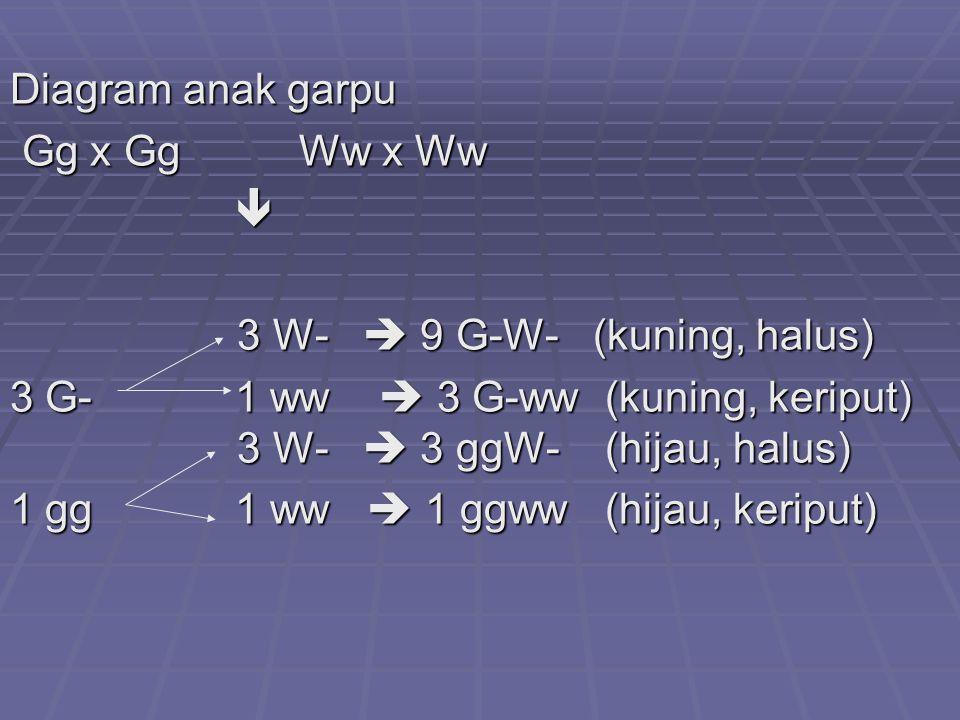 Diagram anak garpu Gg x Gg Ww x Ww Gg x Gg Ww x Ww  3 W-  9 G-W- (kuning, halus) 3 W-  9 G-W- (kuning, halus) 3 G- 1 ww  3 G-ww (kuning, keriput) 3 W-  3 ggW- (hijau, halus) 1 gg 1 ww  1 ggww (hijau, keriput)