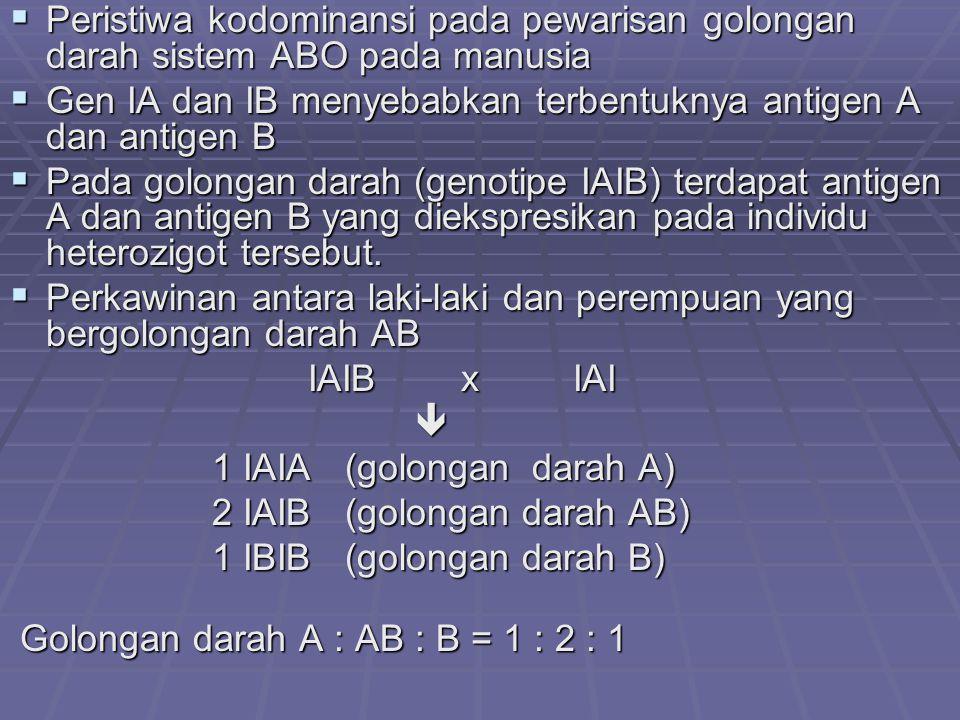  Peristiwa kodominansi pada pewarisan golongan darah sistem ABO pada manusia  Gen IA dan IB menyebabkan terbentuknya antigen A dan antigen B  Pada golongan darah (genotipe IAIB) terdapat antigen A dan antigen B yang diekspresikan pada individu heterozigot tersebut.