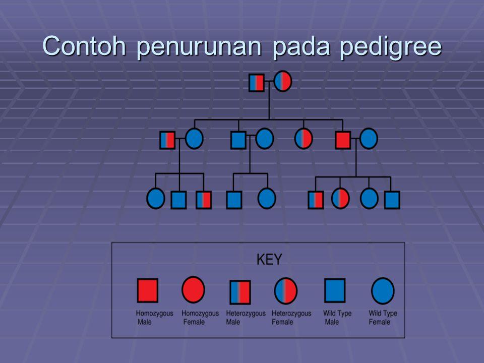 Contoh penurunan pada pedigree