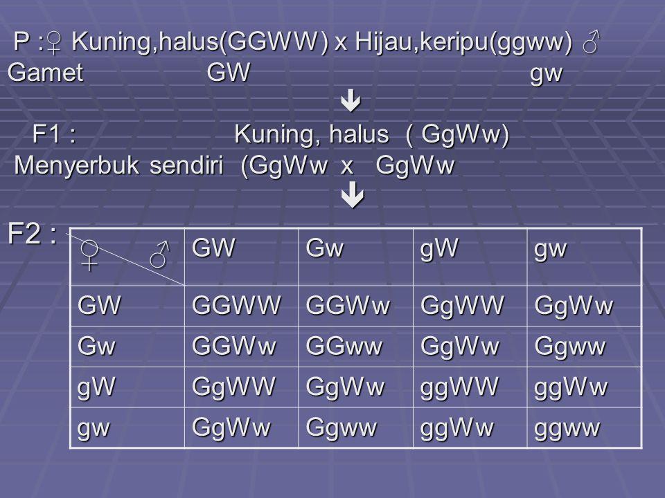 P :♀ Kuning,halus(GGWW) x Hijau,keripu(ggww) ♂ P :♀ Kuning,halus(GGWW) x Hijau,keripu(ggww) ♂ Gamet GW gw  F1 : Kuning, halus ( GgWw) Menyerbuk sendiri (GgWw x GgWw Menyerbuk sendiri (GgWw x GgWw F2 : ♀ ♂ GWGwgWgw GWGGWWGGWwGgWWGgWw GwGGWwGGwwGgWwGgww gWGgWWGgWwggWWggWw gwGgWwGgwwggWwggww