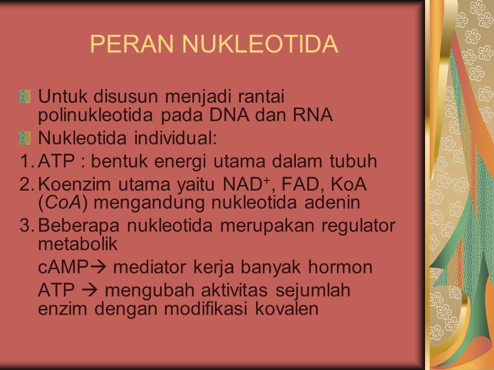 PERAN NUKLEOTIDA Untuk disusun menjadi rantai polinukleotida pada DNA dan RNA Nukleotida individual: 1.ATP : bentuk energi utama dalam tubuh 2.Koenzim