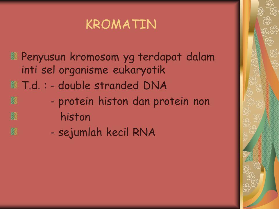 KROMATIN Penyusun kromosom yg terdapat dalam inti sel organisme eukaryotik T.d. : - double stranded DNA - protein histon dan protein non histon - seju