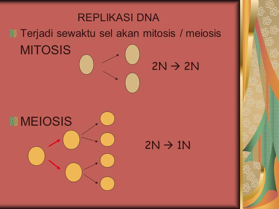 REPLIKASI DNA Terjadi sewaktu sel akan mitosis / meiosis MITOSIS MEIOSIS 2N  2N 2N  1N