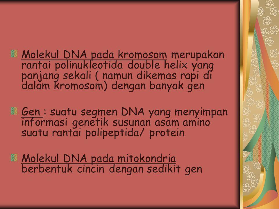 Molekul DNA pada kromosom merupakan rantai polinukleotida double helix yang panjang sekali ( namun dikemas rapi di dalam kromosom) dengan banyak gen G