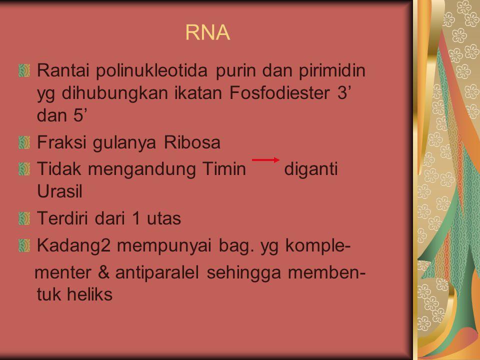 RNA Rantai polinukleotida purin dan pirimidin yg dihubungkan ikatan Fosfodiester 3' dan 5' Fraksi gulanya Ribosa Tidak mengandung Timin diganti Urasil