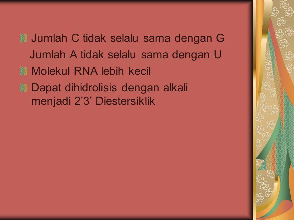 Jumlah C tidak selalu sama dengan G Jumlah A tidak selalu sama dengan U Molekul RNA lebih kecil Dapat dihidrolisis dengan alkali menjadi 2'3' Diesters