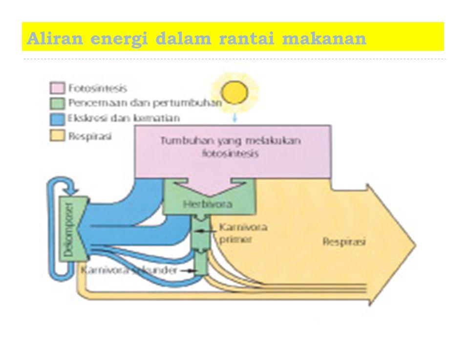 Aliran energi dalam rantai makanan