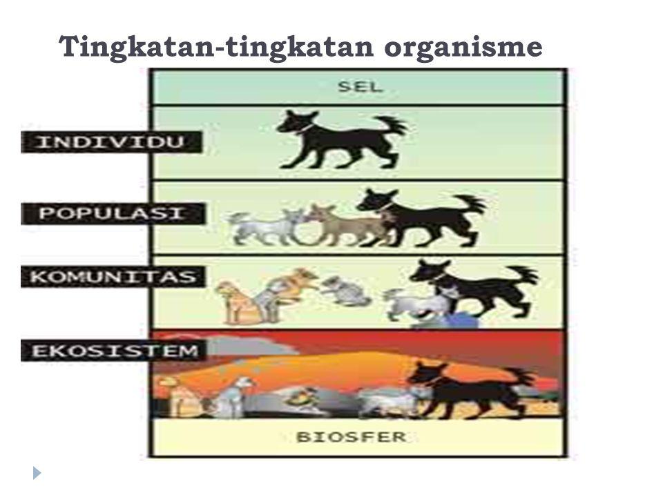 Individu  Individu merupakan organisme tunggal seperti : seekor tikus, seekor kucing, sebatang pohon jambu, sebatang pohon kelapa, dan seorang manusia.