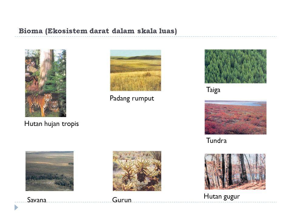 Bioma (Ekosistem darat dalam skala luas) Hutan hujan tropis Savana Padang rumput Gurun Taiga Tundra Hutan gugur
