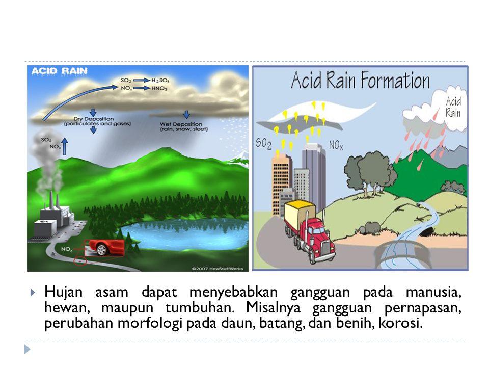 Hujan asam dapat menyebabkan gangguan pada manusia, hewan, maupun tumbuhan. Misalnya gangguan pernapasan, perubahan morfologi pada daun, batang, dan