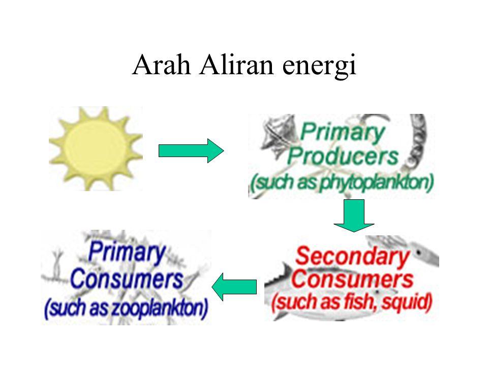 Siklus Materi vs Aliran Energi