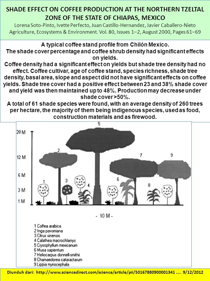 SHADE EFFECT ON COFFEE PRODUCTION AT THE NORTHERN TZELTAL ZONE OF THE STATE OF CHIAPAS, MEXICO Lorena Soto-Pinto, Ivette Perfecto, Juan Castillo-Herna