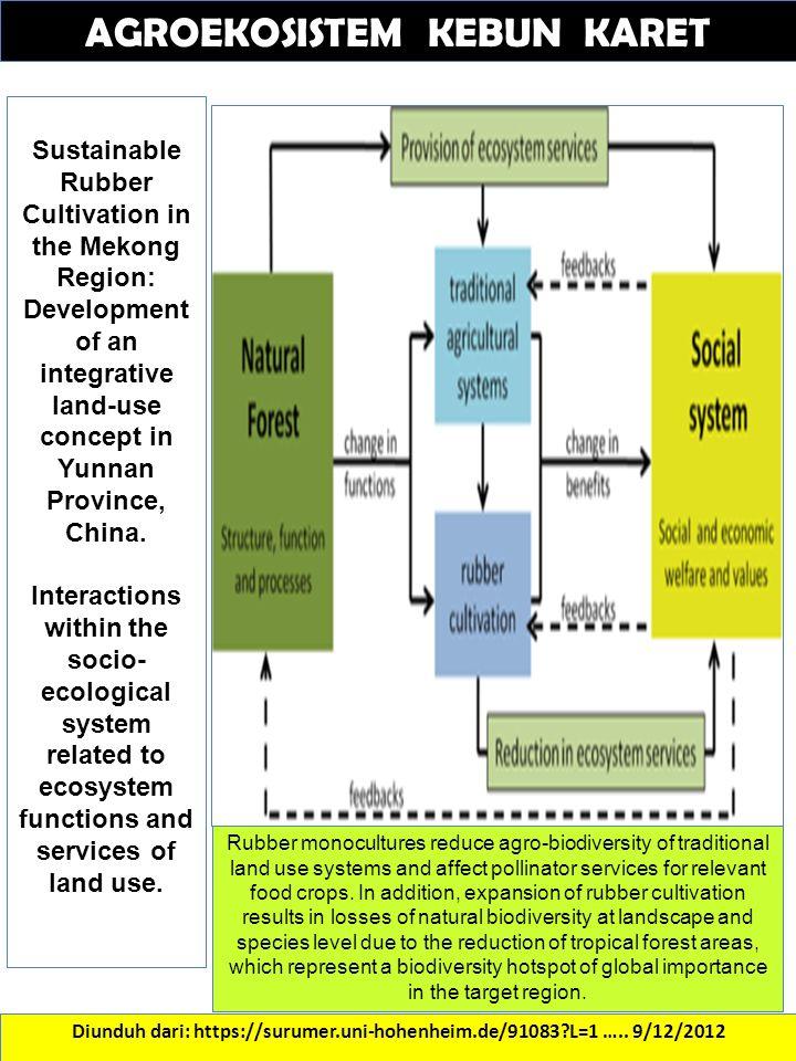 Diunduh dari: https://surumer.uni-hohenheim.de/91083?L=1 ….. 9/12/2012 AGROEKOSISTEM KEBUN KARET Sustainable Rubber Cultivation in the Mekong Region: