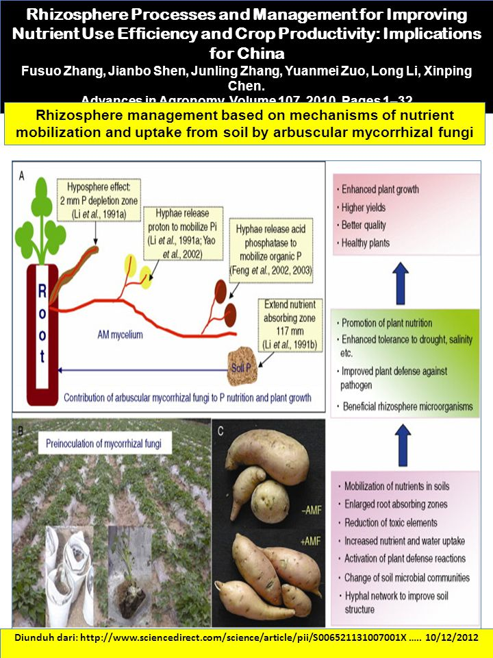 Diunduh dari: http://www.sciencedirect.com/science/article/pii/S006521131007001X ….. 10/12/2012 Rhizosphere Processes and Management for Improving Nut