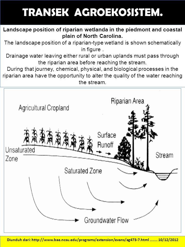 TRANSEK AGROEKOSISTEM. Diunduh dari: http://www.bae.ncsu.edu/programs/extension/evans/ag473-7.html …….. 10/12/2012 Landscape position of riparian wetl