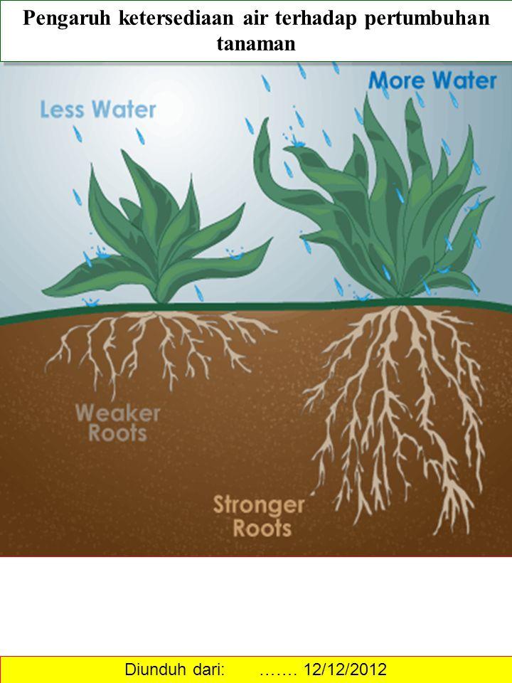 Pengaruh ketersediaan air terhadap pertumbuhan tanaman Diunduh dari: ……. 12/12/2012