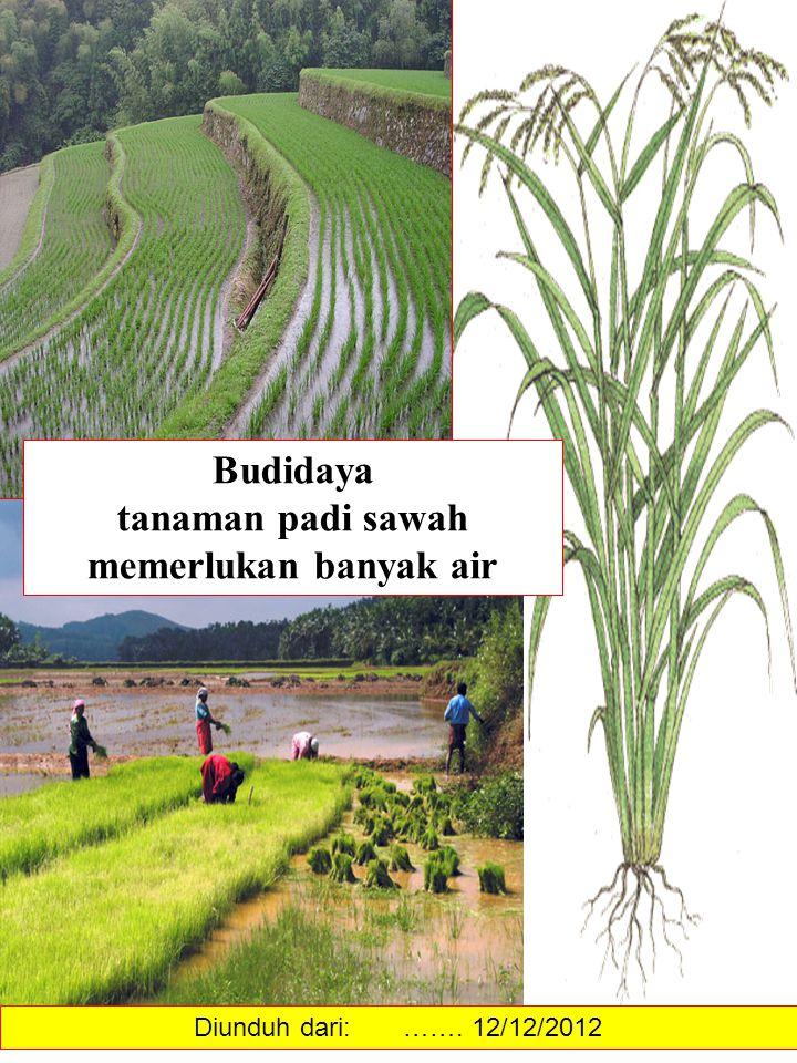 Budidaya tanaman padi sawah memerlukan banyak air Diunduh dari: ……. 12/12/2012