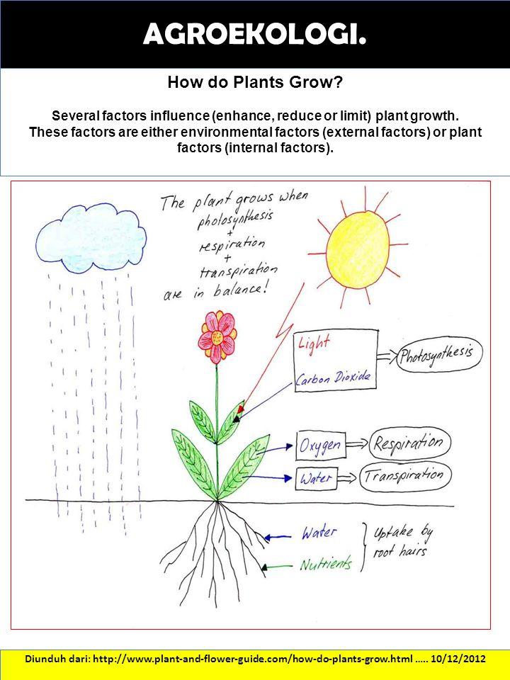 THE COFFEE ECOSYSTEM Diunduh dari: http://www.ineedcoffee.com/05/ecodynamic/…..