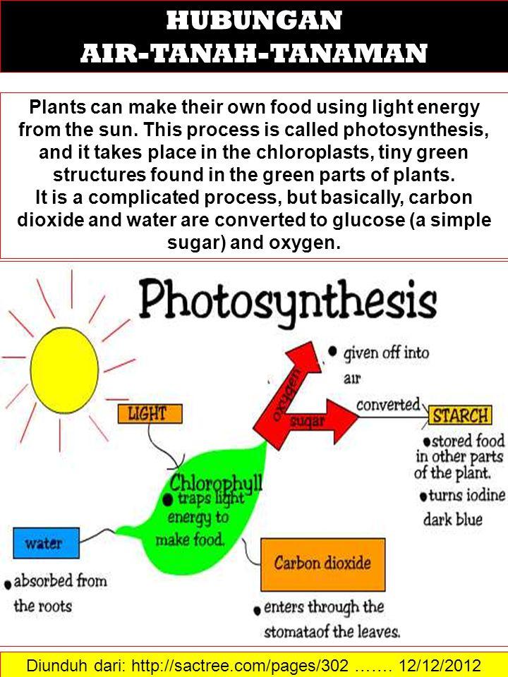Diunduh dari: http://sactree.com/pages/302 ……. 12/12/2012 HUBUNGAN AIR-TANAH-TANAMAN Plants can make their own food using light energy from the sun. T