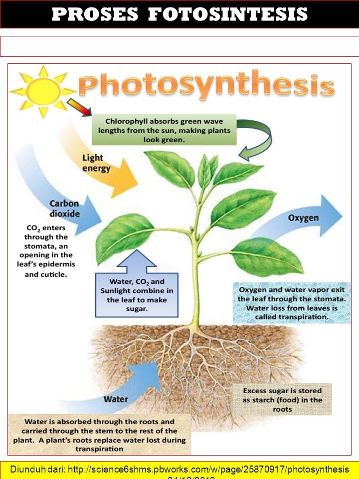 Diunduh dari: http://science6shms.pbworks.com/w/page/25870917/photosynthesis ……. 24/12/2012 PROSES FOTOSINTESIS
