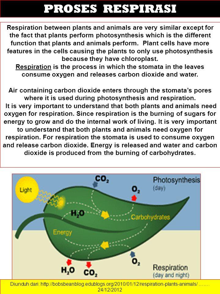 Diunduh dari: http://bobsbeanblog.edublogs.org/2010/01/12/respiration-plants-animals/ ……. 24/12/2012 PROSES RESPIRASI Respiration between plants and a