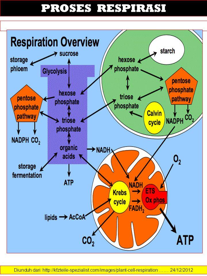 Diunduh dari: http://kfzteile-spezialist.com/images/plant-cell-respiration ……. 24/12/2012 PROSES RESPIRASI