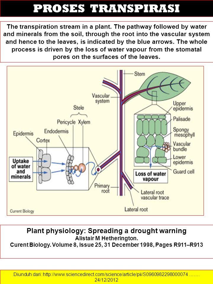 Diunduh dari: http://www.sciencedirect.com/science/article/pii/S0960982298000074 ……. 24/12/2012 PROSES TRANSPIRASI The transpiration stream in a plant