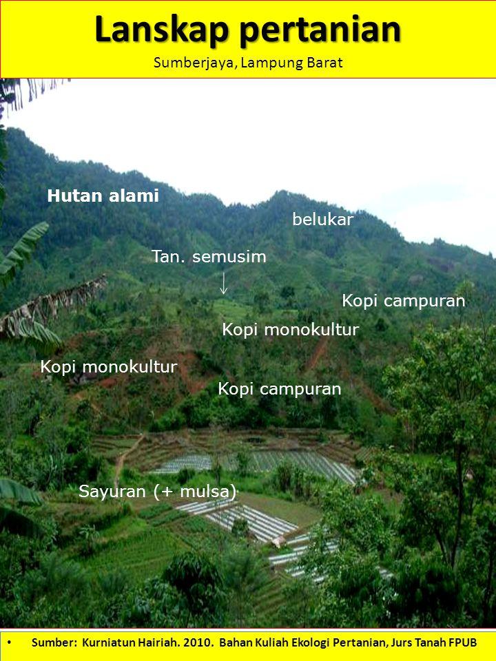Lanskap pertanian Sumberjaya, Lampung Barat Hutan alami Kopi monokultur Sayuran (+ mulsa) Kopi campuran Kopi monokultur Kopi campuran Tan. semusim bel