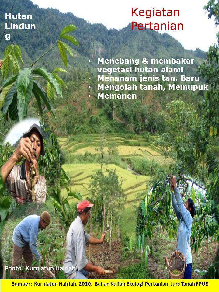 Photo: Kurniatun Hairiah Hutan Lindun g Menebang & membakar vegetasi hutan alami Menanam jenis tan. Baru Mengolah tanah, Memupuk Memanen Kegiatan Pert