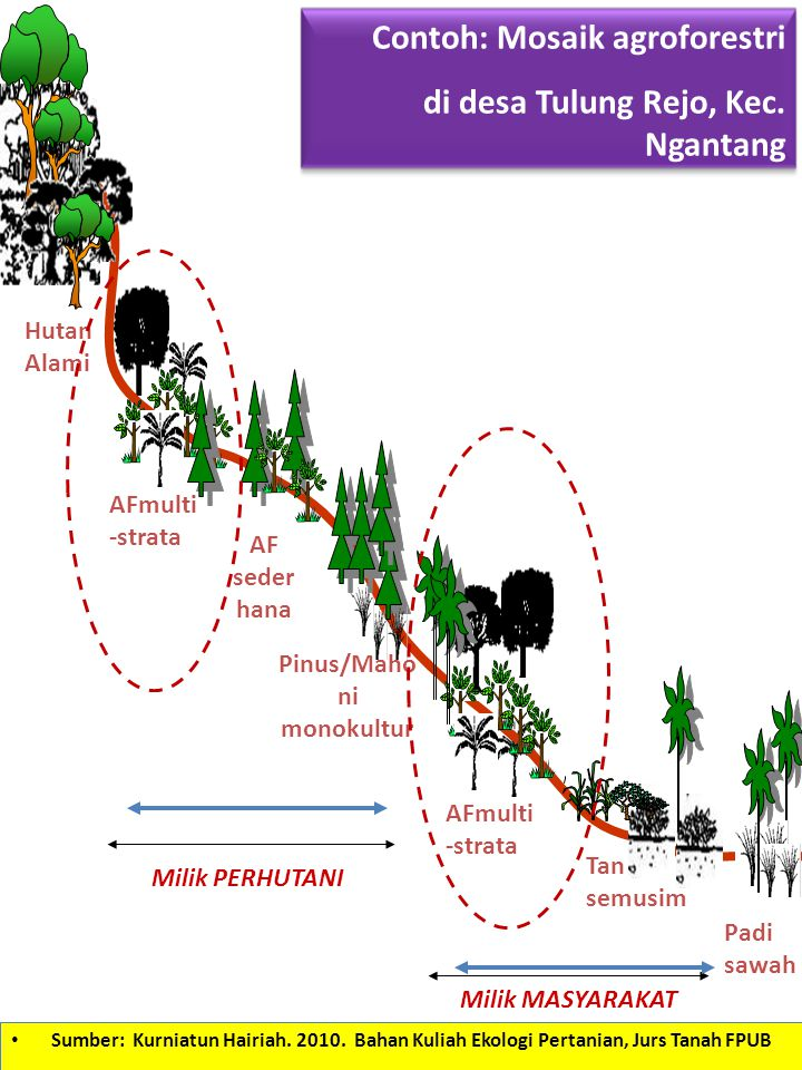 Hutan Alami AFmulti -strata AF seder hana Pinus/Maho ni monokultur AFmulti -strata Tan semusim Padi sawah Contoh: Mosaik agroforestri di desa Tulung R