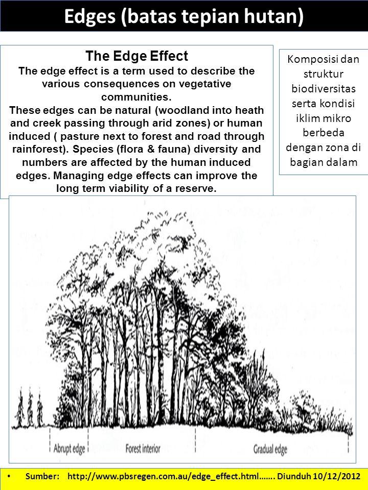 Edges (batas tepian hutan) Komposisi dan struktur biodiversitas serta kondisi iklim mikro berbeda dengan zona di bagian dalam Sumber: http://www.pbsre