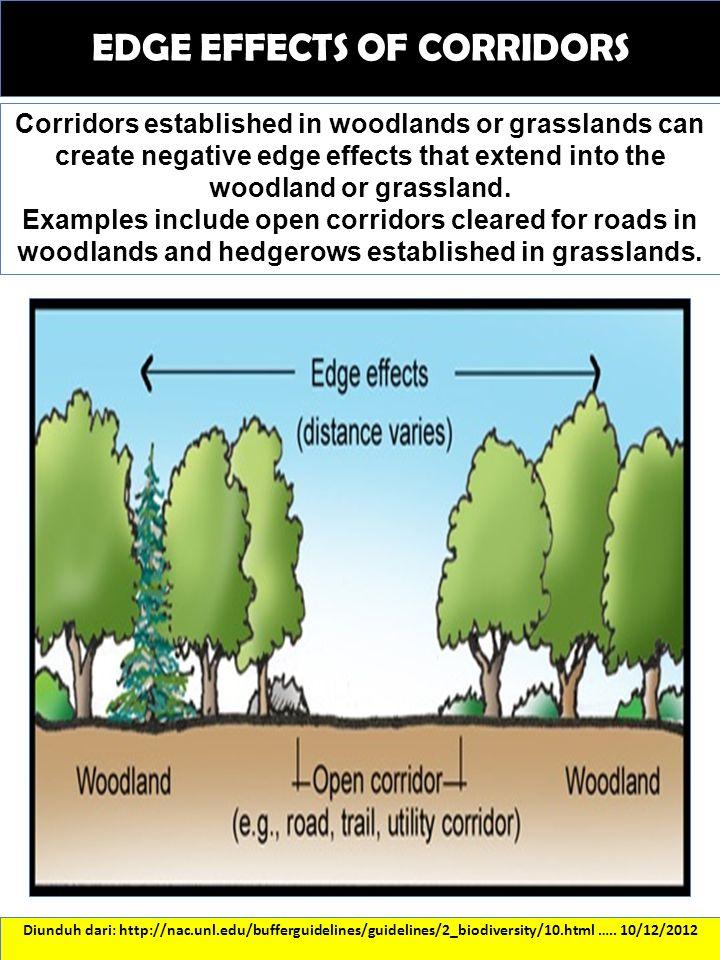 EDGE EFFECTS OF CORRIDORS Diunduh dari: http://nac.unl.edu/bufferguidelines/guidelines/2_biodiversity/10.html ….. 10/12/2012 Corridors established in