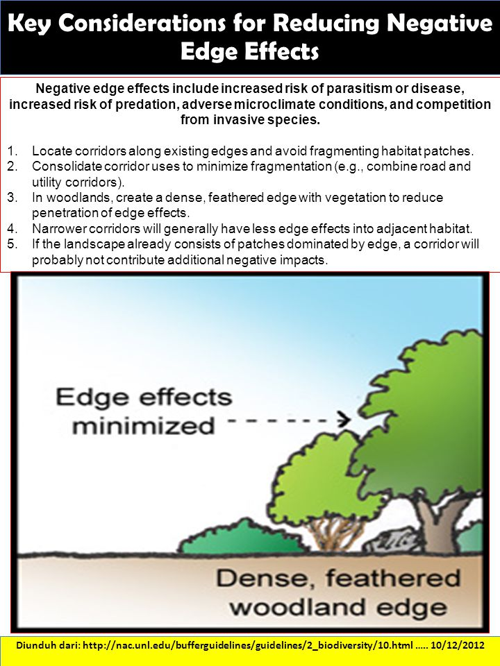 Key Considerations for Reducing Negative Edge Effects Diunduh dari: http://nac.unl.edu/bufferguidelines/guidelines/2_biodiversity/10.html ….. 10/12/20
