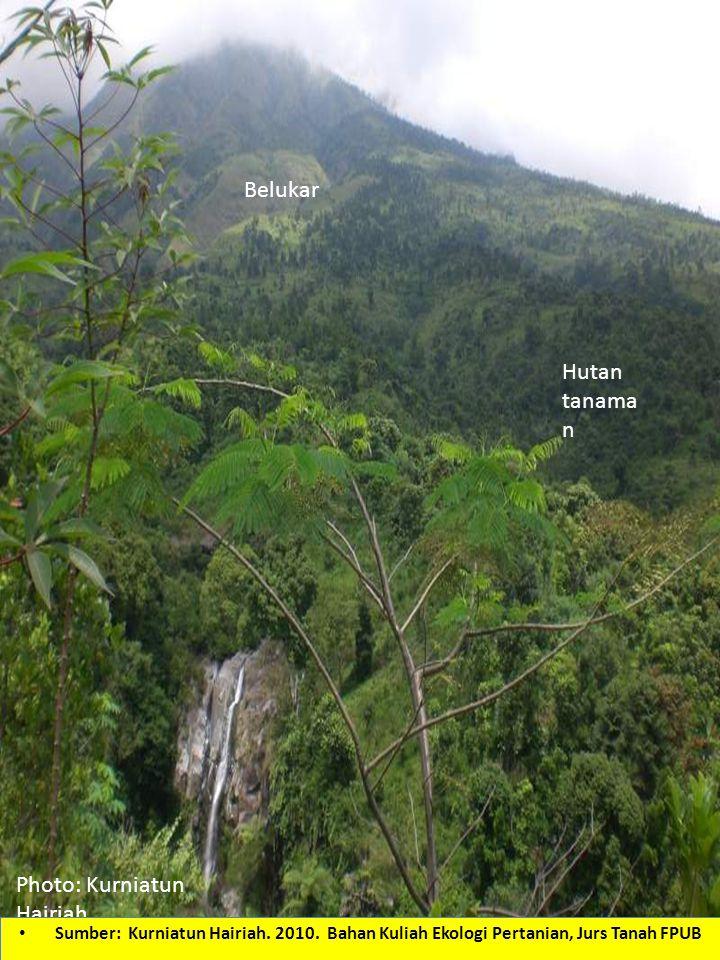 Hutan tanama n Belukar Photo: Kurniatun Hairiah Sumber: Kurniatun Hairiah. 2010. Bahan Kuliah Ekologi Pertanian, Jurs Tanah FPUB