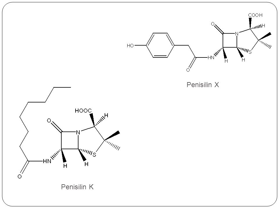Penisilin X Penisilin K